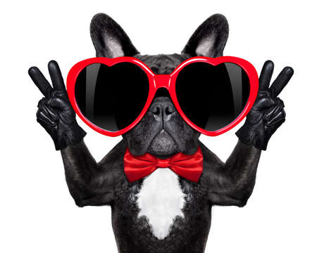 Foto de french bulldog dog happy and in love  , showing peace and victory fingers , isolated on white background - Imagen libre de derechos