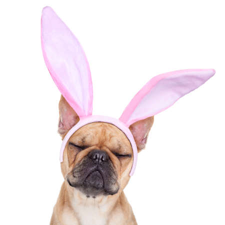 Foto de french bulldog dog  with bunny easter ears ,sleeping with closed eyes ,  isolated on white background - Imagen libre de derechos