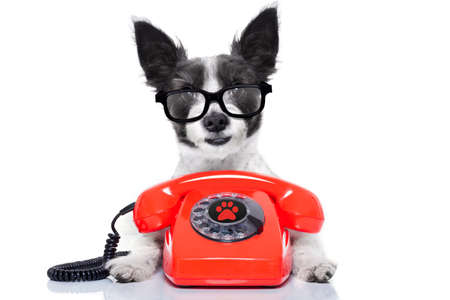 Photo pour black terrier dog with  glasses as secretary or operator with red old  dial telephone or retro classic phone - image libre de droit
