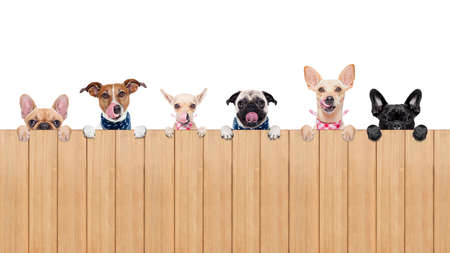 Foto de row of dogs as a group or team , all hungry and tonge sticking out , behind a wall of wood , isolated on white background - Imagen libre de derechos