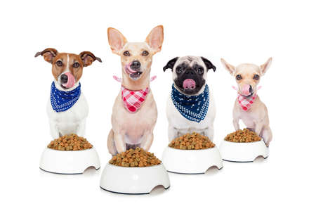 row of dogs as a group or team , all hungry and tonge sticking out ,in front of food bowls , isolated on white background