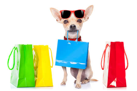 Photo for chihuahua dog with shopping bags ready for discount and sale at the  mall, isolated on white background - Royalty Free Image