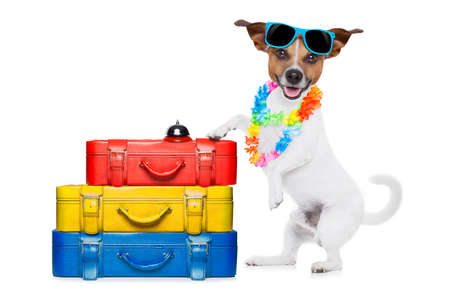 Photo pour jack russell dog checking in at hotel with a lot luggage and baggage and a suitcase for summer holiday vacation, wearing sunglasses and a flower chain isolated on white background - image libre de droit