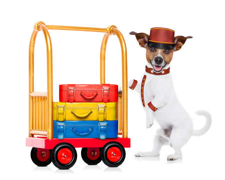 Photo pour jack russell dog pushing a hotel Luggage Cart or trolley full of luggage and bags, ready to check in , in a pet friendly hotel, isolated on white background - image libre de droit