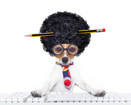 Photo pour jack russell secretary dog booking a reservation online using a pc computer laptop keyboard ,with crazy silly afro wig , pencil in hair, isolated on white background - image libre de droit