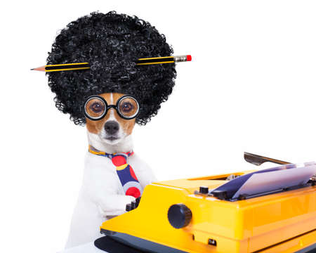 Photo for jack russell secretary dog typing on a typewriter keyboard  , isolated on white background, wearing a crazy afro wig - Royalty Free Image