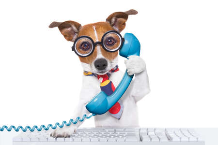 Foto de jack russell dog on  a call center using the phone or telephone and computer pc  keyboard , isolated on white background - Imagen libre de derechos