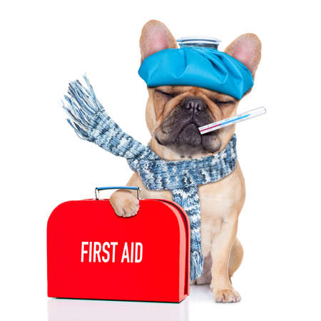 Foto de french bulldog dog  with  headache and hangover with ice bag or ice pack on head,thermometer in mouth with  fever, holding a  first aid kit, eyes closed and suffering , isolated on white background - Imagen libre de derechos