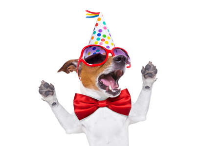 Foto de jack russell dog  as a surprise, singing birthday song  , wearing  red tie and party hat  , isolated on white background - Imagen libre de derechos