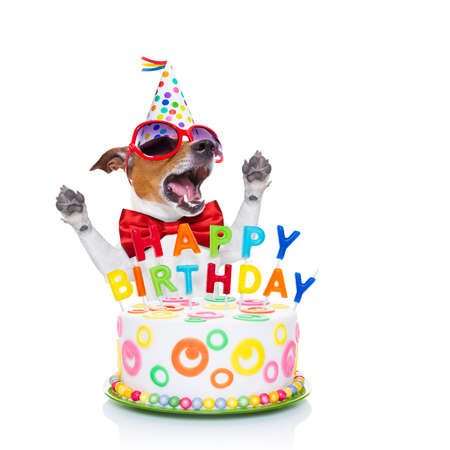Photo for jack russell dog  as a surprise, singing birthday song  ,behind funny cake,  wearing  red tie and party hat  , isolated on white background - Royalty Free Image