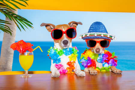 Foto de funny cool couple of  dogs drinking cocktails at the bar in a  beach club party with ocean view on summer vacation holidays - Imagen libre de derechos
