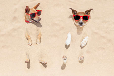 Foto de couple of two dogs  buried in the sand at the beach on summer vacation holidays , having fun and enjoying ,wearing red sunglasses fun and enjoying ,wearing red sunglasses - Imagen libre de derechos