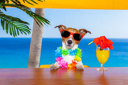 Photo pour funny cool dog drinking cocktails at the bar in a  beach club party with ocean view on summer vacation holidays - image libre de droit