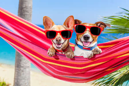 Foto de couple of two  dogs relaxing on a fancy red  hammock with sunglasses in summer vacation holidays at the beach under the palm tree - Imagen libre de derechos