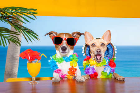 Photo pour funny cool couple of  dogs drinking cocktails at the bar in a  beach club party with ocean view on summer vacation holidays - image libre de droit