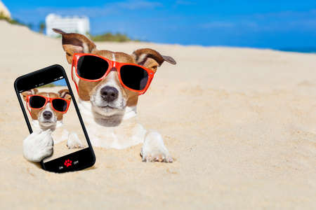 Foto de jack russell dog  buried in the sand at the beach on summer vacation holidays , taking a selfie, wearing red sunglasses - Imagen libre de derechos