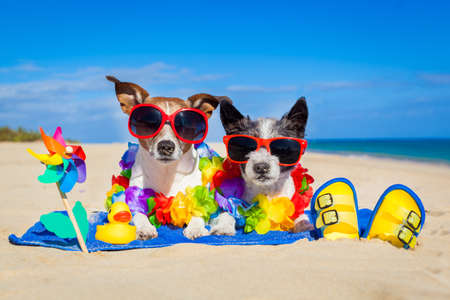 Photo pour couple of two dog sitting close together on towel at the beach on summer vacation holidays - image libre de droit