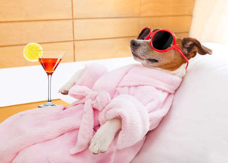 Photo pour jack russell dog relaxing  and lying, in   spa wellness center ,wearing a  bathrobe and funny sunglasses , martini cocktail inlcuded - image libre de droit