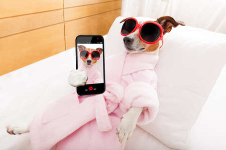 Photo pour jack russell dog relaxing  and lying, in   spa wellness center ,wearing a  bathrobe and funny sunglasses, while making a selfie with smartphone - image libre de droit