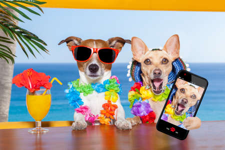 Foto de two funny drunk dogs with a summer cocktail ,while taking a selfie with a smartphone telephone , on summer vacation holidays - Imagen libre de derechos