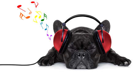 Photo pour french bulldog dog listening to music with earphones or headphones,while relaxing or sleeping on the floor, isolated on white background - image libre de droit
