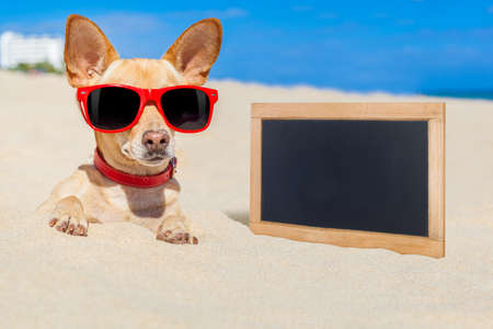 chihuahua dog  buried in a hole in  the sand at the beach on summer vacation holidays , wearing red sunglasses, ocean shore behind, empty blank banner to the side