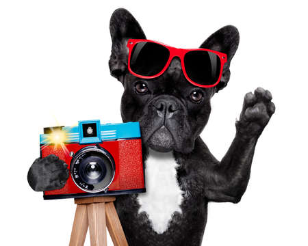 Photo for cool tourist photographer dog taking a snapshot or picture with a retro old camera gesturing  - Royalty Free Image