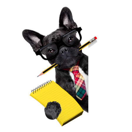 Photo pour office businessman french bulldog dog with pen or pencil in mouth with notepad behind blank empty banner or placard,  isolated on white background - image libre de droit