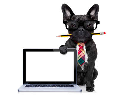 Photo pour office businessman french bulldog dog with pen or pencil in mouth behind a  blank pc computer laptop screen , isolated on white background - image libre de droit