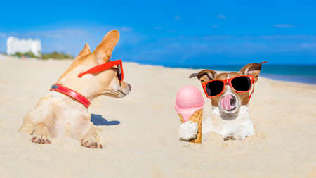 Photo for couple of two dogs , one  licking ice cream with tongue buried in sand  at the ocean beach in summer vacation holidays,other dog jealous about it - Royalty Free Image