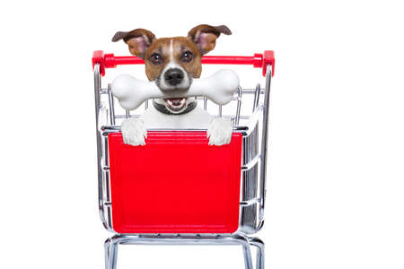 jack russell dog inside a shopping cart trolley , behind  a blank  empty banner or placard, with a bone in mouth , isolated on white background
