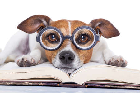 Foto de jack russell dog reading a book with nerd glasses, looking smart and intelligent, isolated on white background - Imagen libre de derechos