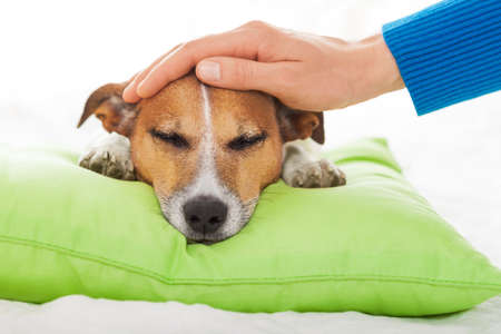 Photo pour owner  petting his dog, while he is sleeping or resting  , feeling sick and ill with temperature, eyes closed - image libre de droit