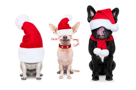 row and group of santa claus dogs, for christmas holidays, eyes covered by the hat , isolated on white background