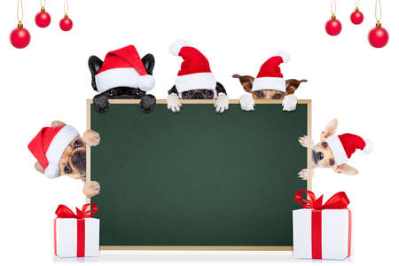 row and group of different santa claus dogs behind an empty blank banner , placard or blackboard, for christmas holidays isolated on white background