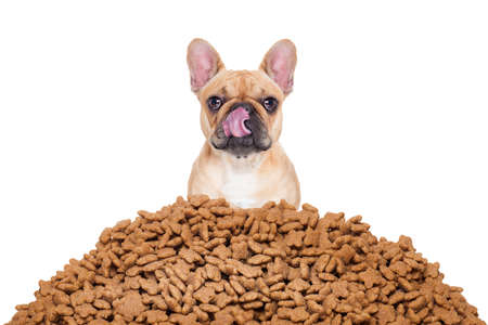 Foto de hungry  bulldog dog behind a big mound or cluster of food , isolated on white background - Imagen libre de derechos