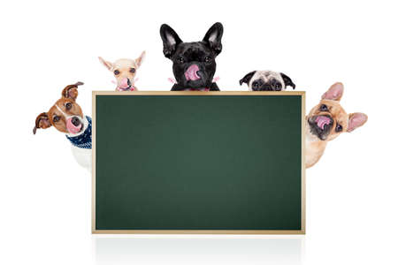group row of different dogs behind a blank banner ,placard or blackboard, isolated on white background
