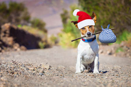 jack russell dog abandoned and left all alone on the road or street with red santa hat , begging to come home for christmas