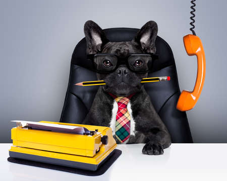 Photo for office businessman french bulldog dog  as  boss and chef , with typewriter as a secretary,  sitting on leather chair and desk, in need for vacation - Royalty Free Image