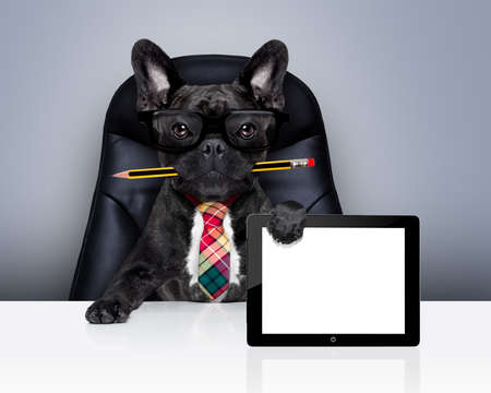 office businessman french bulldog dog with pen or pencil in mouth  , behind laptop pc tablet screen ,  sitting on a leather chair