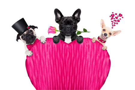 group, row or team of dogs around valentines banner or placard, isolated on white background