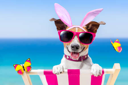Photo pour jack russell dog on a hammock , during easter holidays, with bunny ears, at the beach - image libre de droit