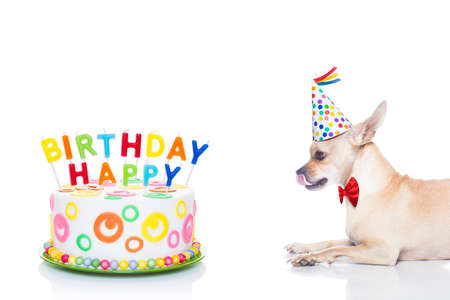 chihuahua dog  hungry for a happy birthday cake with candels ,wearing  red tie and party hat  , isolated on white background
