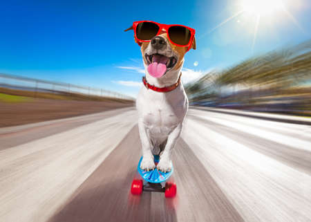Photo pour jack russell terrier dog  riding very fast with speed a skateboard as skater , with sunglasses in summer vacation close to the beach - image libre de droit