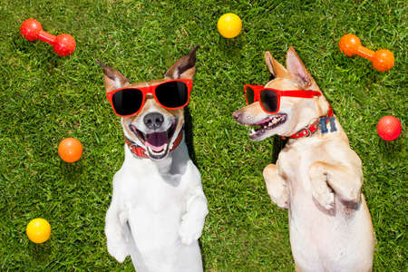 couple of dogs funny  and laughing on grass or meadow in park  with  pet toys all over  ,  on summer vacation holidays