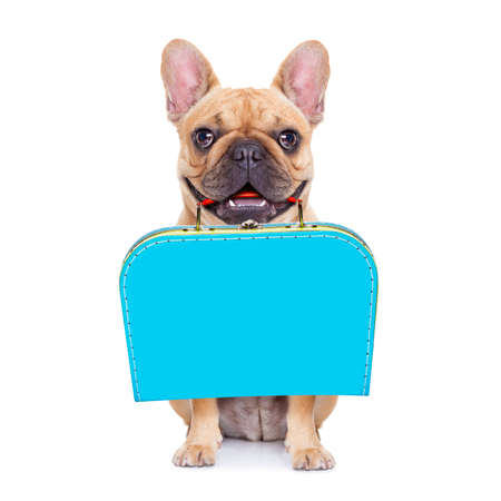 french bulldog dog abandoned and left all alone on the road or street, with luggage bag  , begging to come home to owners, isolated on white background