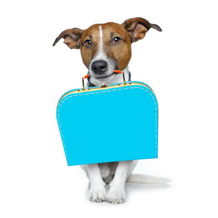jack russell dog abandoned and left all alone on the road or street, with luggage bag  , begging to come home to owners, isolated on white background