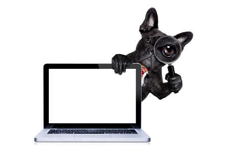 Foto de french bulldog  dog searching and finding as a spy with magnifying glass , isolated on white background, behind pc computer laptop screen tablet, isolated on white background - Imagen libre de derechos