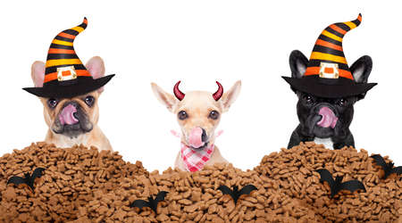 row and group of halloween hungry dogs  in front of food wall, isolated on white background,, licking with tongue
