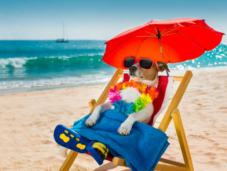 Photo for jack russel dog resting and relaxing on a hammock or beach chair under umbrella at the beach ocean shore, on summer vacation holidays - Royalty Free Image